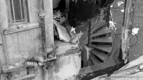 Stray cats in Mumbai in 2006