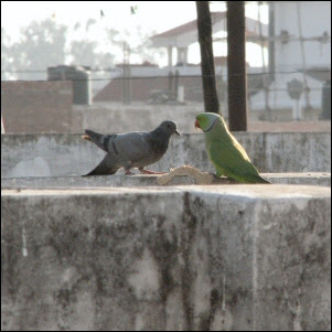Birds dining together in Delhi NCR