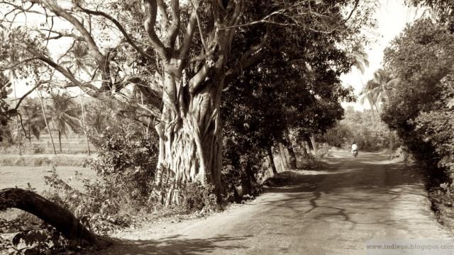 Beautiful road in Goa, India