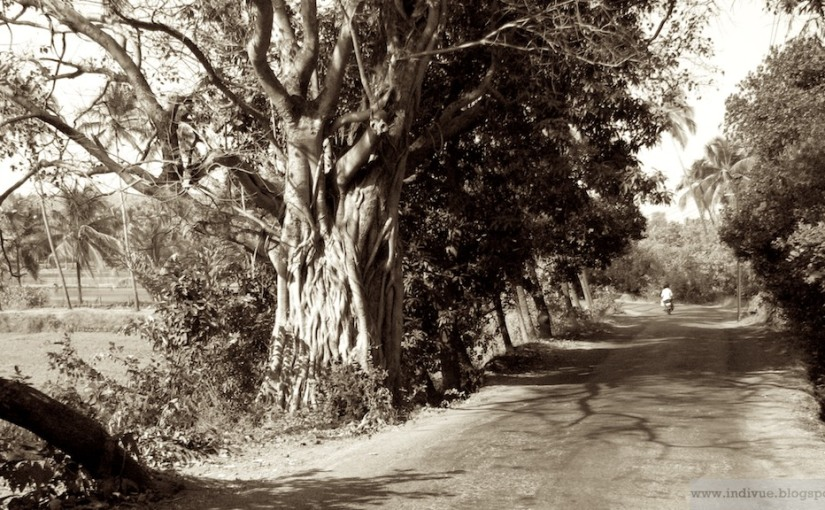 Indian Pic of the Day: A road inGoa
