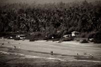Gokarn Beach and palm trees