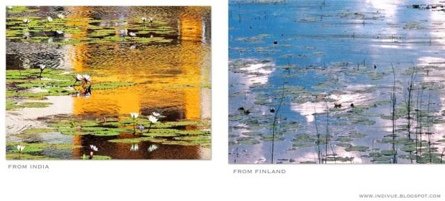 Intialaiset lumpeet ja suomalaiset lumpeet - Indian water lilies and Finnish water lilies - Bhāratīya pānī lilī aur Phiniś pānī lilī