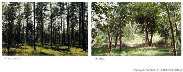 Suomalainen ja intialainen metsä - Finnish and Indian forest