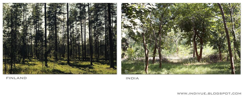 Forests in India and in Finland