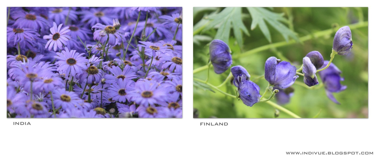 Natural violet color in India and in Finland