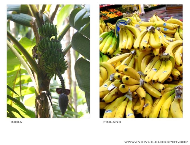 Banaani Suomessa ja Intiassa - a Banana in India and Finland