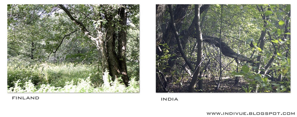 Forest in India and in Finland