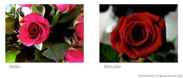 Roses - Ruusuja