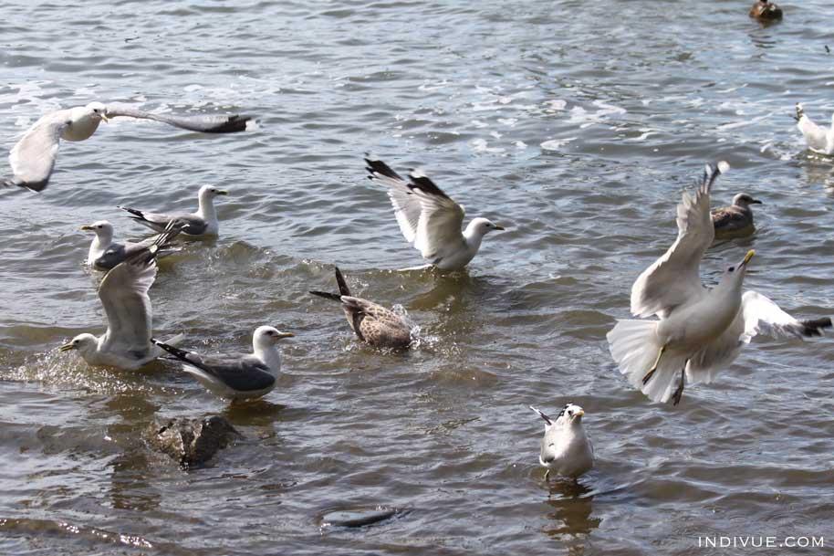 Birds in Seurasaari, Helsinki, Finland