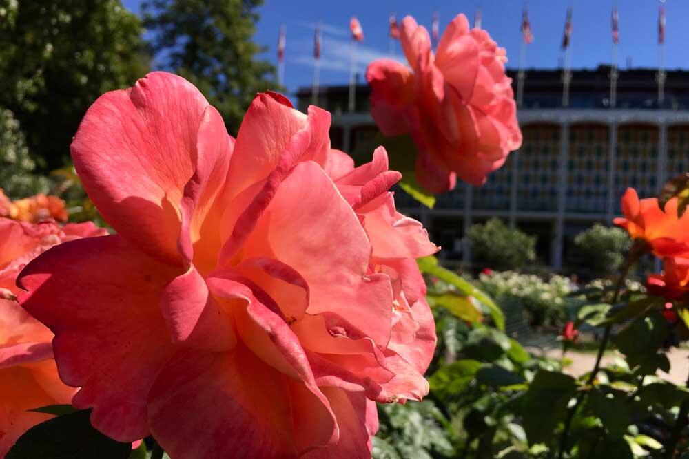 Flowers in Copenhagen Tivoli