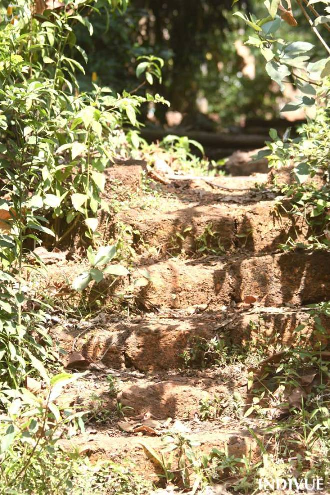 Path and stairs in the Sahakari Spice Farm