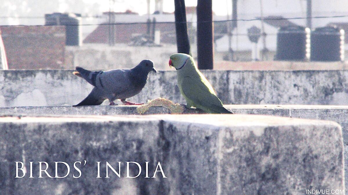 Different bird species eating together in India
