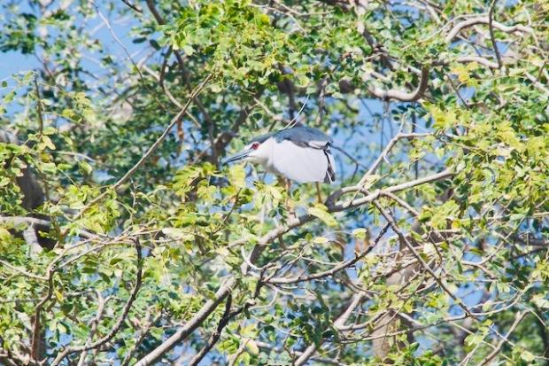 Bird in East India