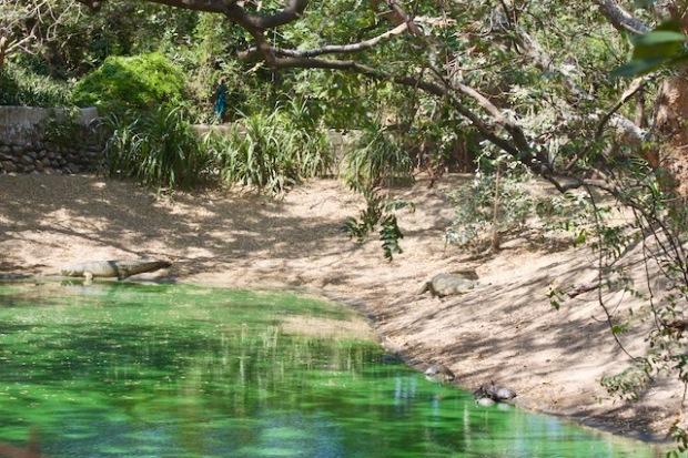 Crocodile park in Tamil Nadu