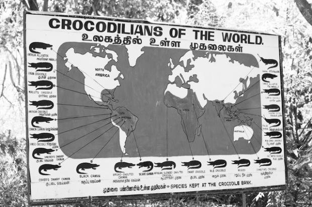 Crocodilians of the world by Madras Crocodile Park East India